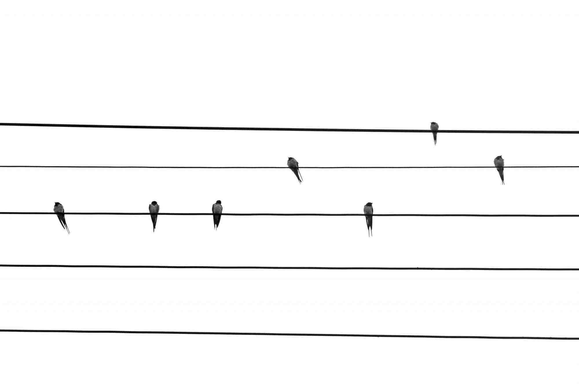 Artwork depicting birds sitting on a wire