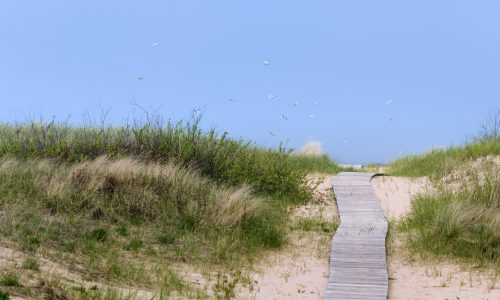 A boardwalk through a sand dune leading to blue sky filled with soaring seagulls.  Shot near the shoreline of Lake Michigan in a tourist area known for dunes and beautiful landscapes.